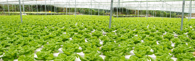 Aquaponic for recycling plant efficiency and environmental