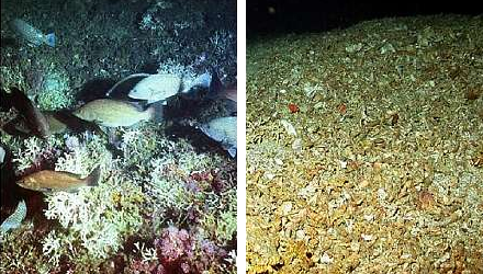Before & After Trawling